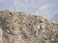0183-canyon-colca-cruz-del-condor