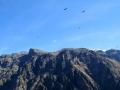 0186-canyon-colca-cruz-del-condor