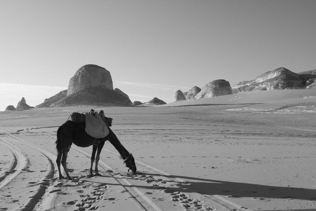 0002-desert-blanc-jpg