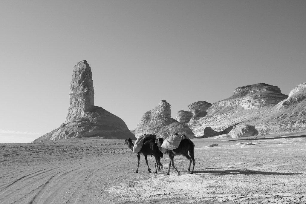 0003-desert-blanc-jpg