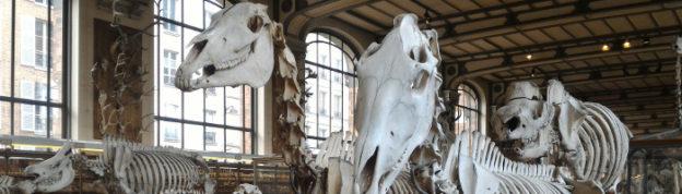 Header-Museum-Paris